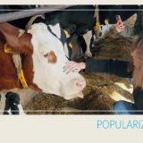 Hospodářství Výzkumného ústavu živočišné výroby v Netlukách bude v pátek 8. října patřit uhříněveským žákům
