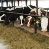Aktuální problémy ve výživě skotu, zejména konzervace objemných krmiv v návaznosti na precizní zemědělství