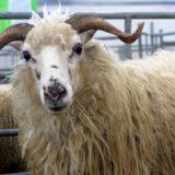 Zveme Vás na Národní výstavu hospodářských zvířat do Brna