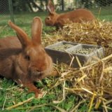 Zveme Vás na listopadový seminář Nové směry v intenzivních a zájmových chovech králíků