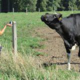 Aktuální otázky bioklimatologie zvířat 2019