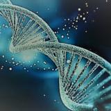 """Pracovní seminář """"Imunogenetika a šlechtění hospodářských zvířat na odolnost k chorobám"""""""